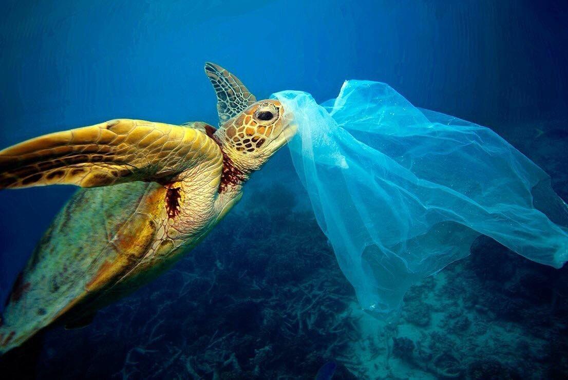 contaminacion por plastico en oceanos dias mundial del medio ambiente onu