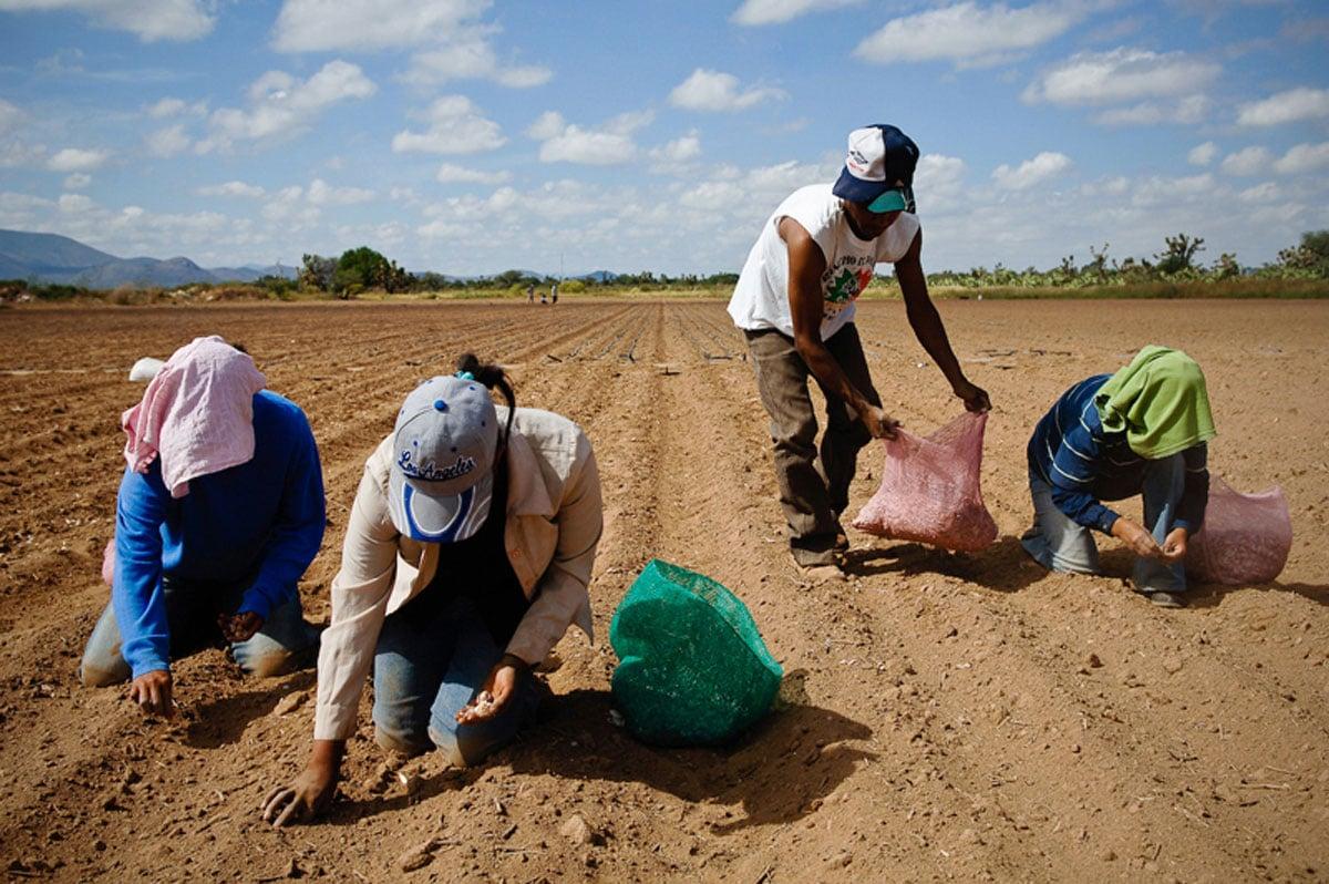 Transnacionales ganan con la crisis del campo, reprochan campesinos a Peña