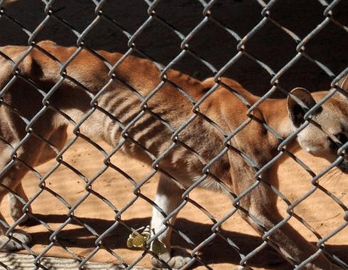 caza-animales-silvestres-aumente-po-crisis-alimenticia-venezuela