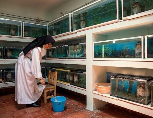 Monjas en Pátzcuaro podrían salvar salamandra en peligro de extinción