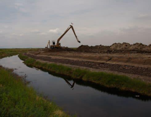 Ecocidio de rapaces en lago texcoco por construcción aeropuerto CDMX